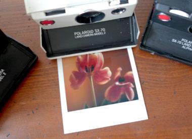 Polaroid SX-70 Land Camera, Tulpe, Photodarium 2017